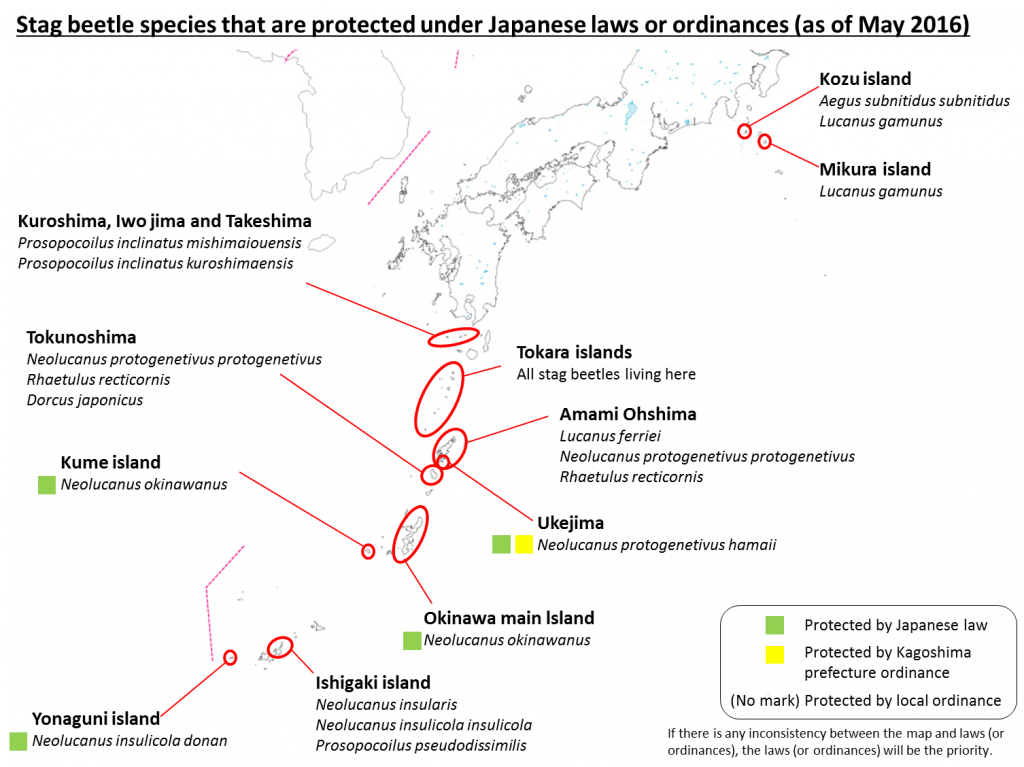 Stag beetle species that are protected under Japanese laws or