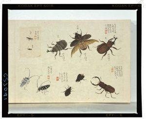 C0027041 虫豸帖 Edo-era