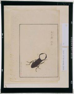 C0067829 博物館虫譜_甲 Meiji-era