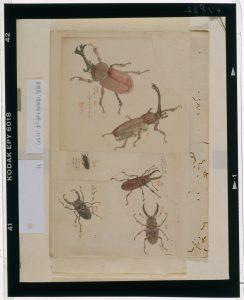 C0067832 博物館虫譜_甲 Meiji-era