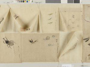 E0040744 草花魚貝虫類写生図 Edo-era